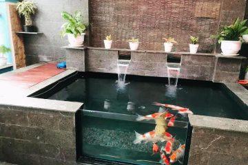 kolam ikan koi Sidoarjo